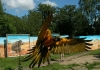 hannoverzoo_papagei