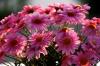 Blumen in Neustadt (Ostsee)